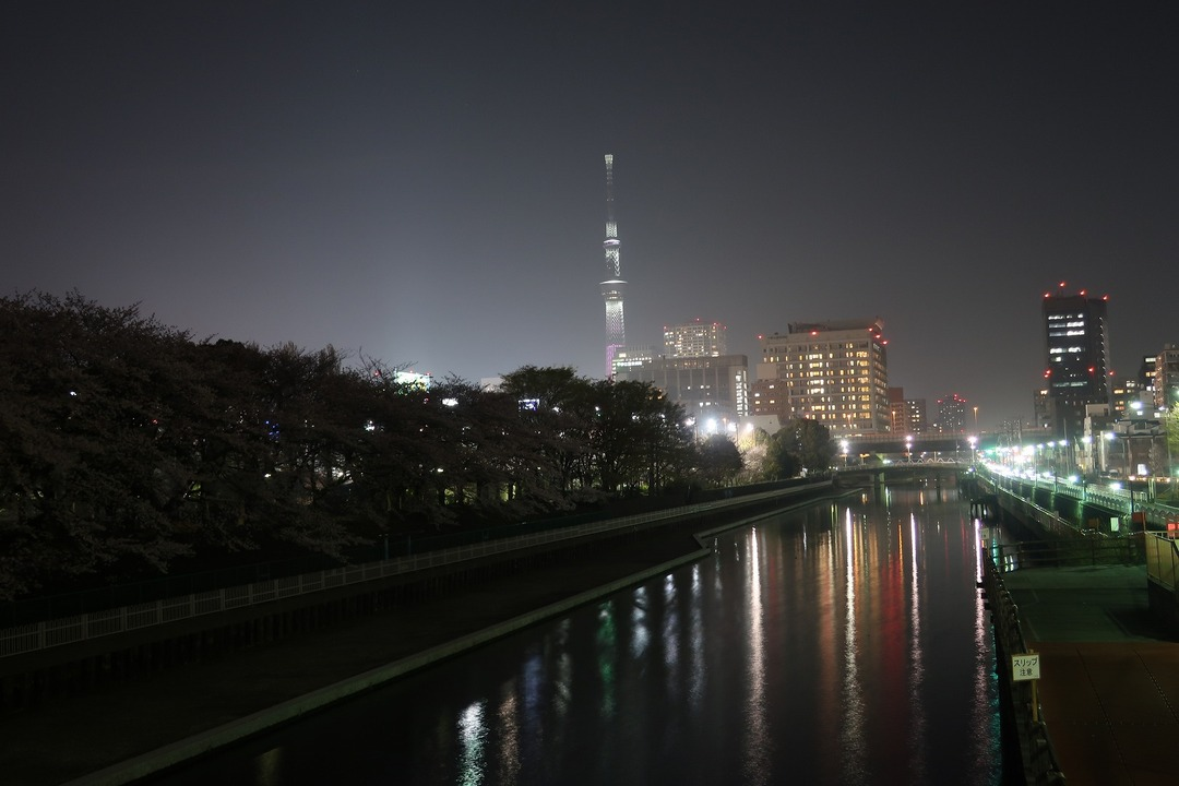 夜の桜 (1)