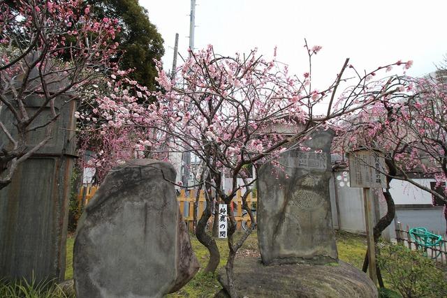 亀戸天神社 (3)