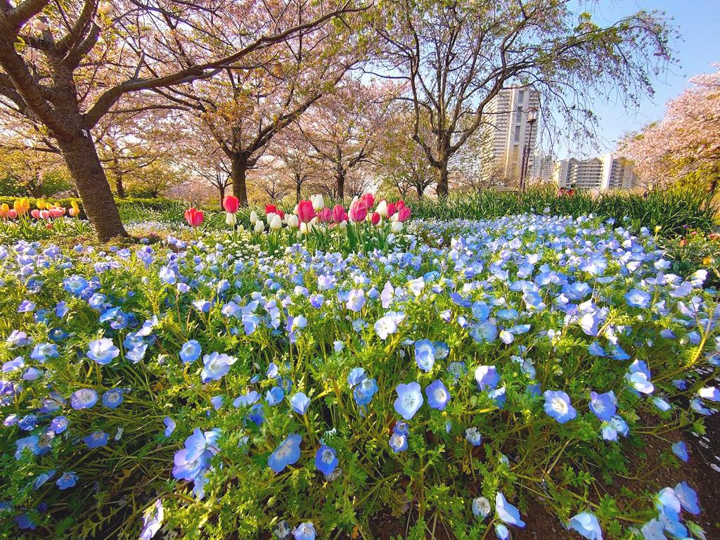 春の公園 (1)