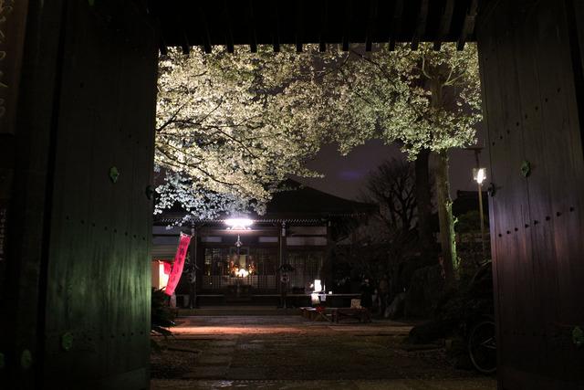 世田谷妙法寺の桜 (4)