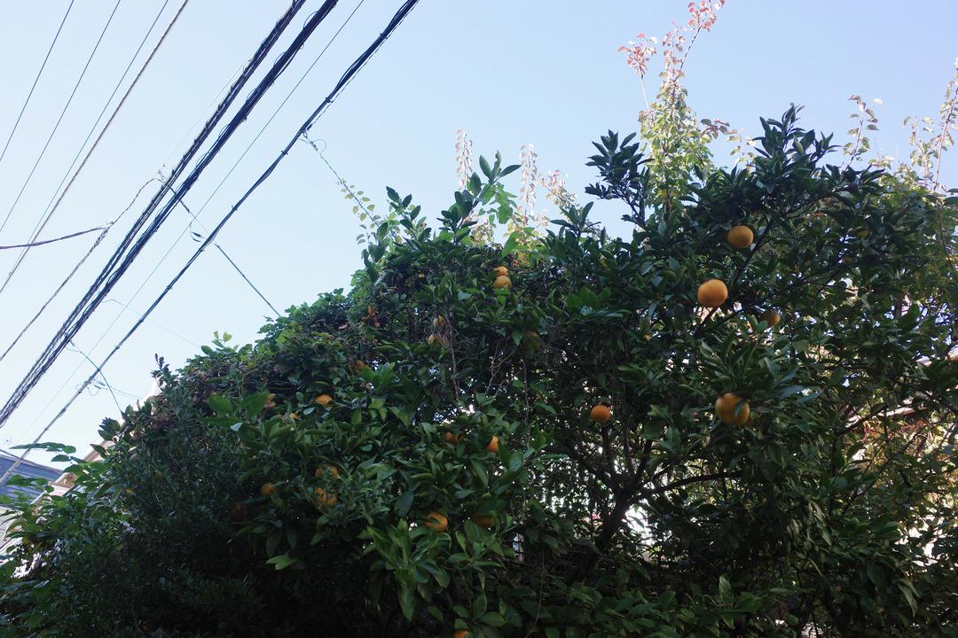東京の下町の秋を見つけに散歩 (2)
