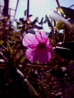庭に咲いてた花006