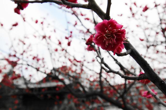 亀戸浅間神社 (22)