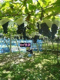 葡萄畑と嫁