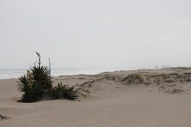 九十九里浜 (14)