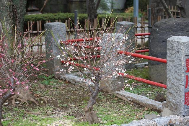 亀戸天神社 (65)