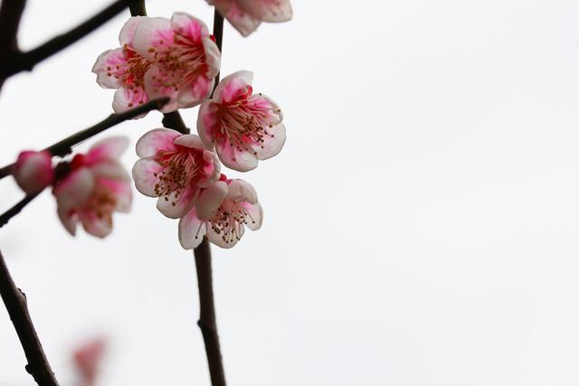 亀戸天神社 (7)