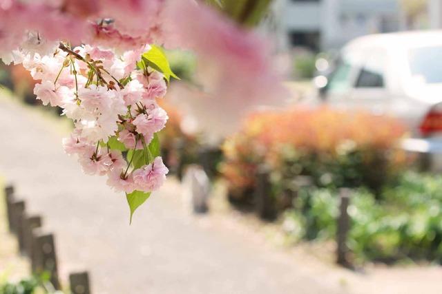 春の日 (4)
