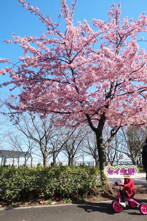 小松川公園 (20)