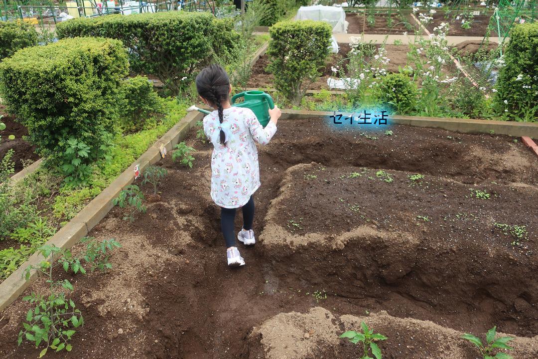 小さな農園 (8)