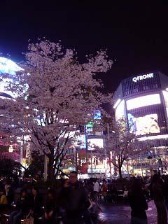 渋谷駅前の桜