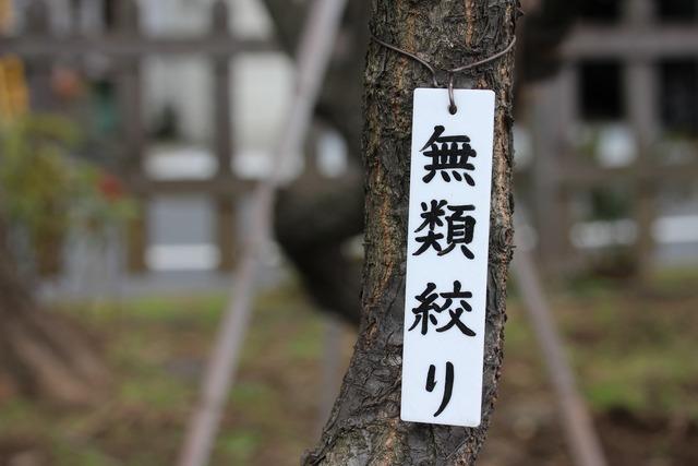 亀戸天神社 (36)