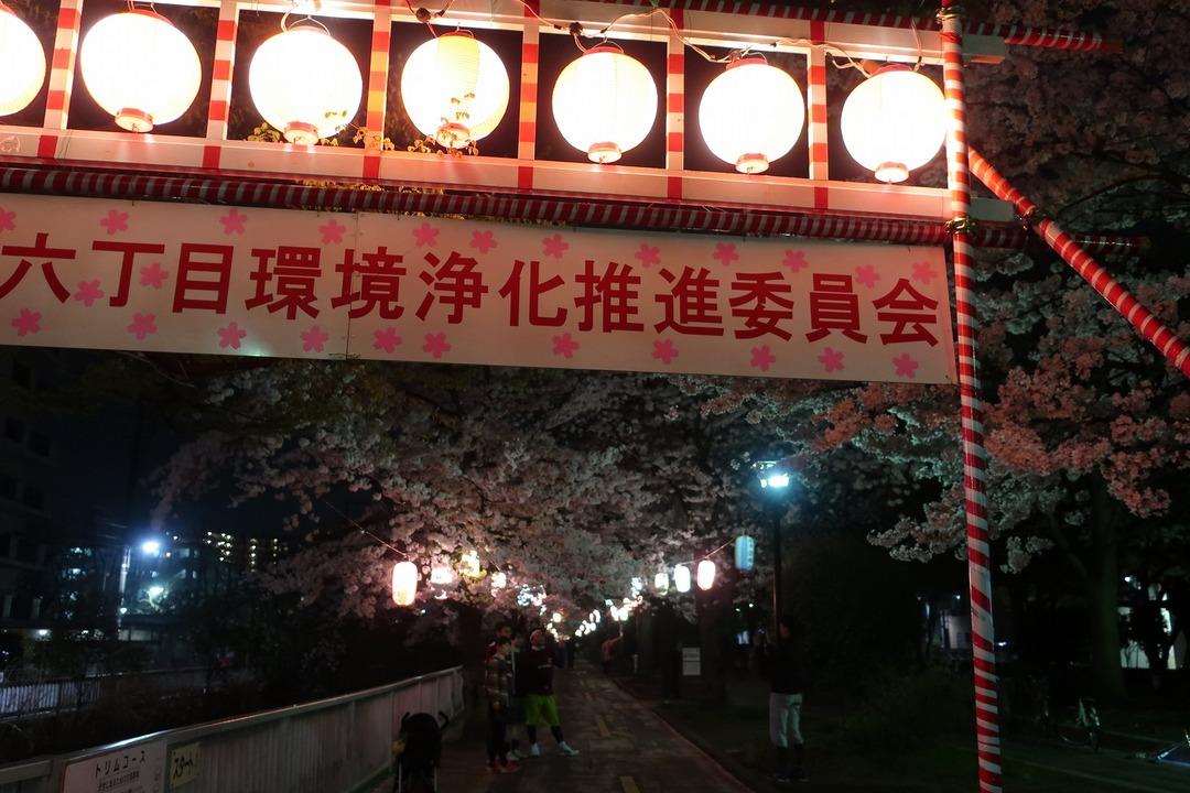 夜の桜 (5)