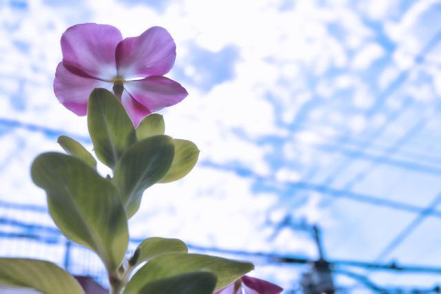 ベランダの花と空