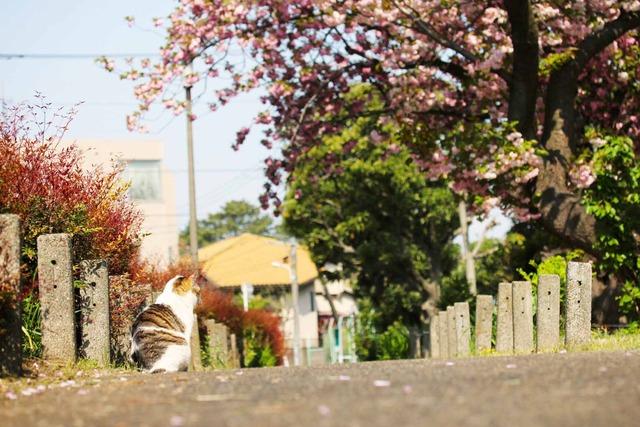 春の日 (7)