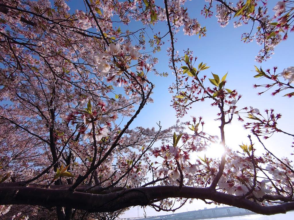 春の公園 (2)