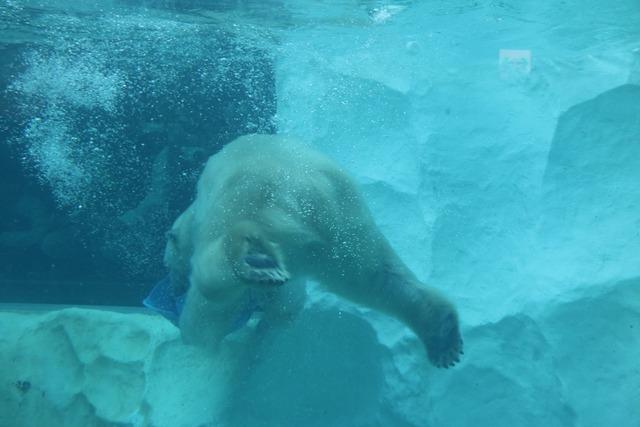 上野動物園 (24)