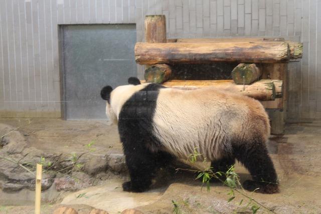 上野動物園 (37)