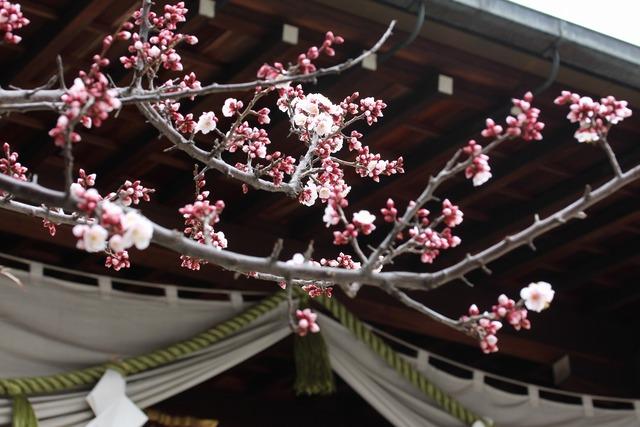 香取神社 (9)