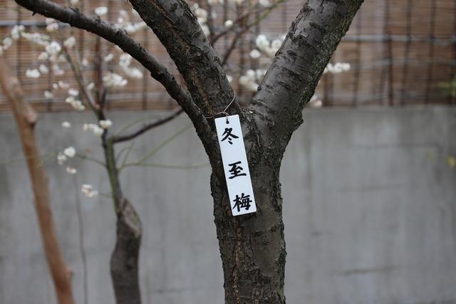 亀戸天神社 (48)