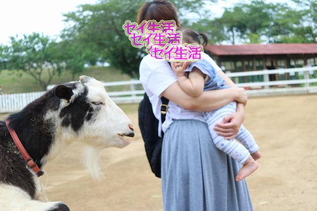 成田ゆめ牧場 (26)