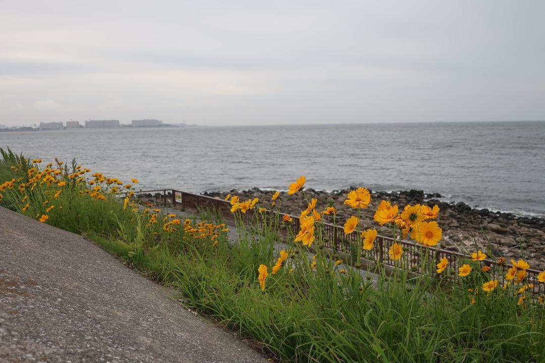 夢の島緑道公園 (10)