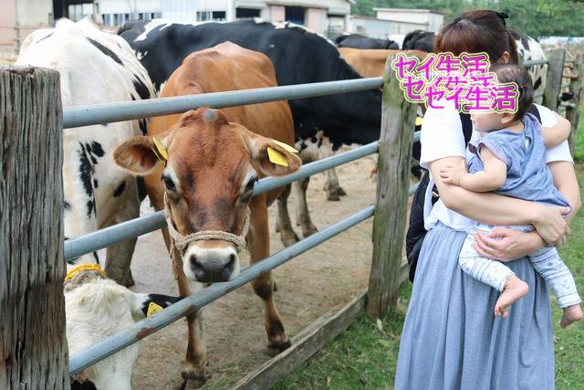 成田ゆめ牧場 (23)