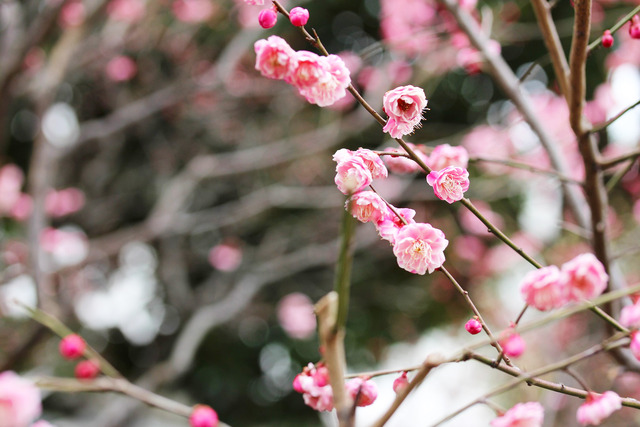 亀戸天神社 (31)