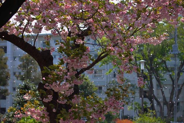 春の日 (3)
