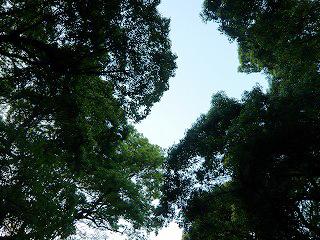 明治神宮からの空