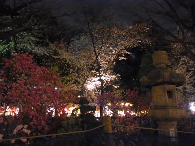 2012桜 (8)