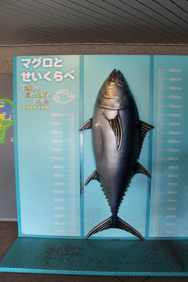水族館 (4)