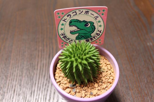 ドラゴンボール (1)