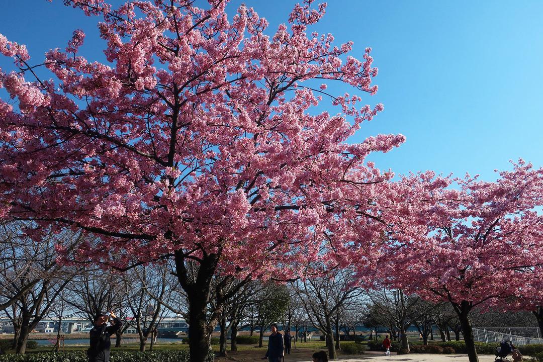 小松川公園 (21)