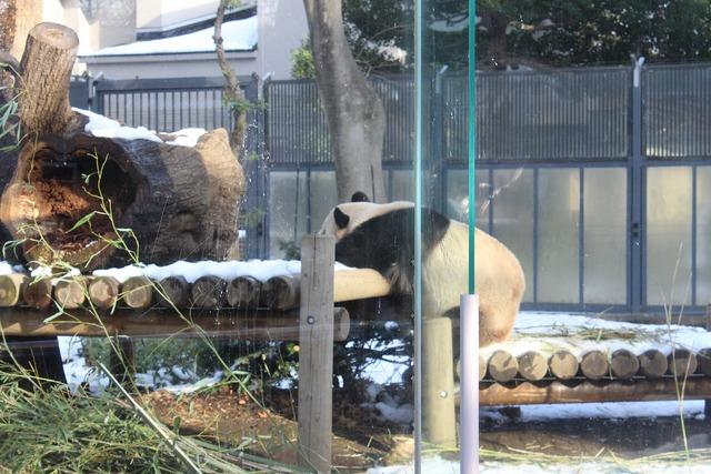 上野動物園 (3)