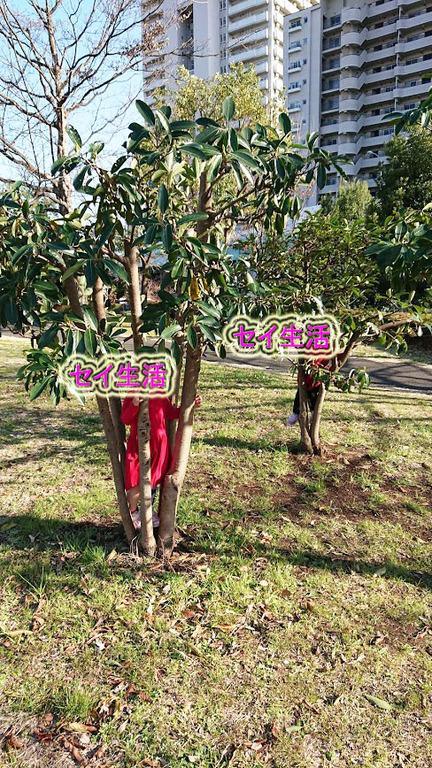 小松川公園 (11)