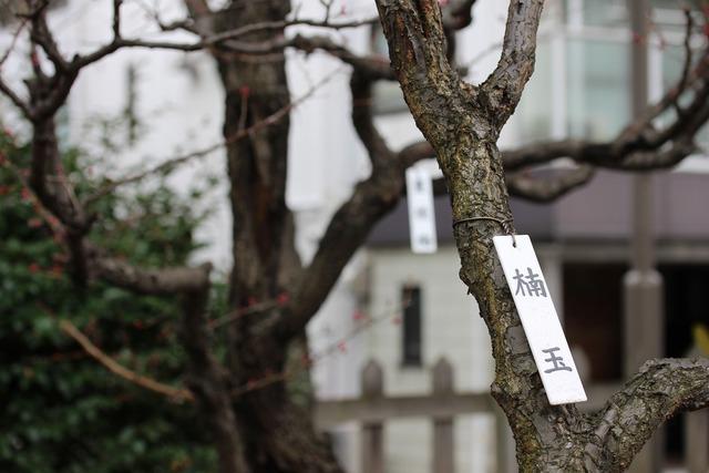 亀戸天神社 (30)