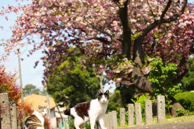 春の日 (8)