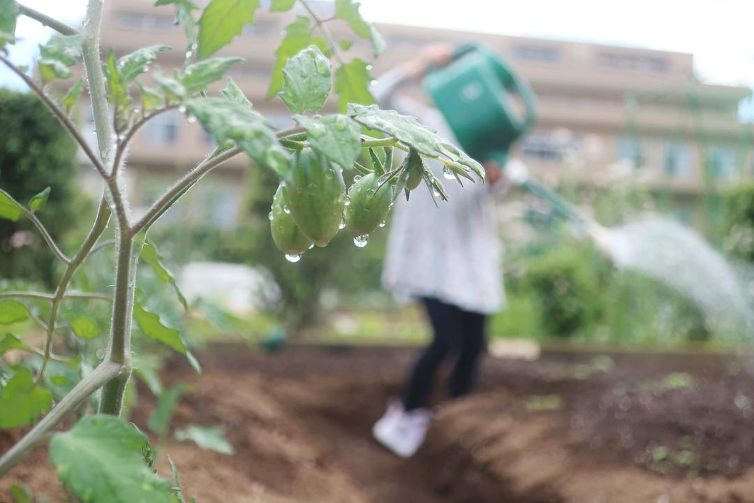 小さな農園 (9)