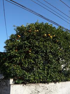 オレンジ色と緑