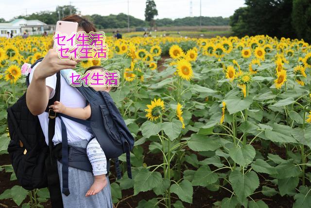 成田ゆめ牧場 (16)
