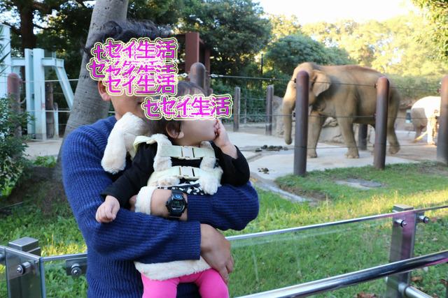 上野動物園 (27)