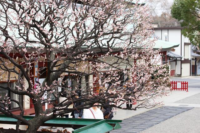 亀戸天神社 (70)