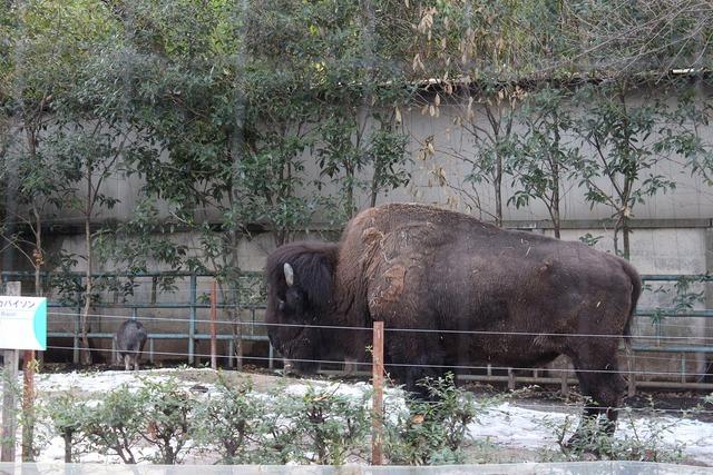 上野動物園 (33)
