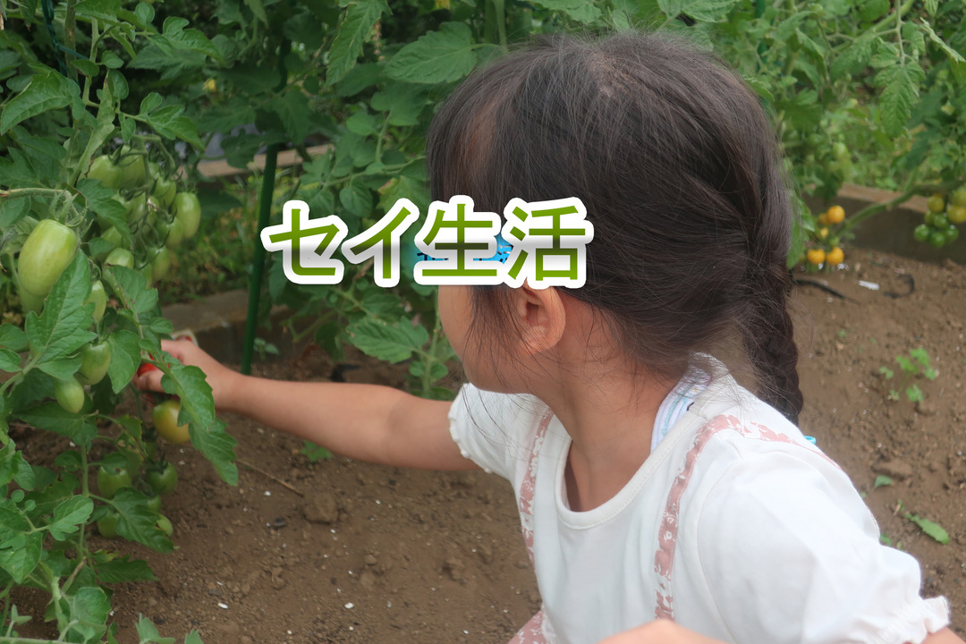 ミニトマトとキャベツ (11)
