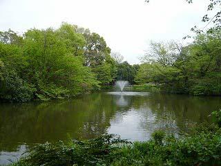 新緑と池と噴水