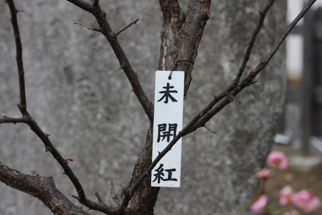 亀戸天神社 (16)