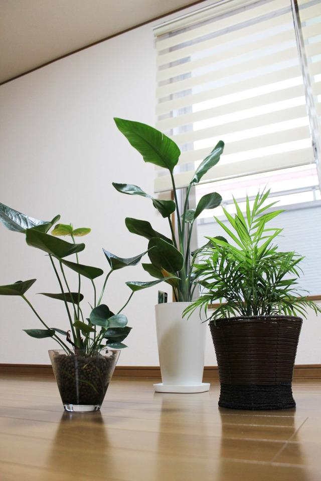 観葉植物 (5)
