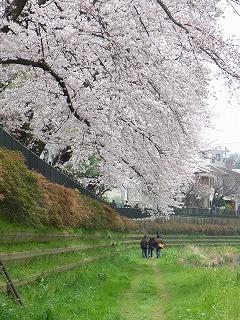 春 (5)
