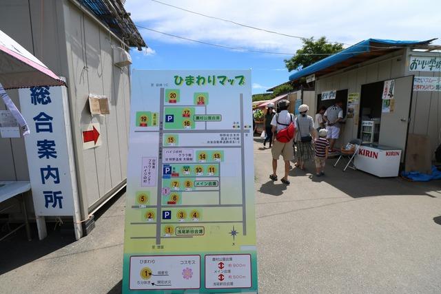 明野ひまわり畑 (4)